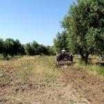 Le fasi della coltivazione